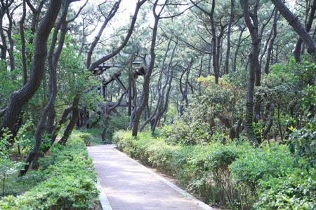 現地周辺茅ヶ崎海岸しおさいの森 1314m