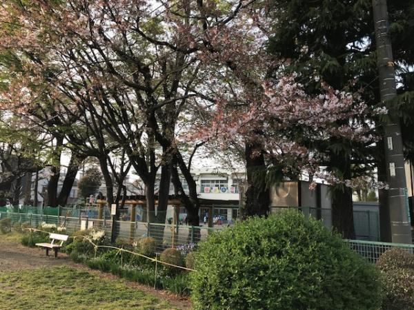 現地周辺水道路に隣接する保育園の桜もベンチに座って楽しめます