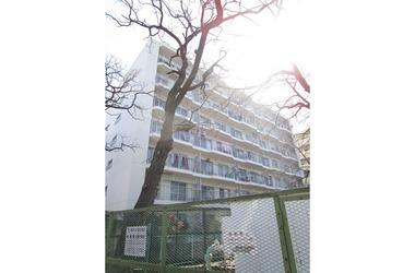 藤和綱島コープ1号棟7階2LDK 賃貸マンション